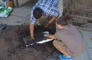 Gabe and Samuel getting trays ready to plant Chia