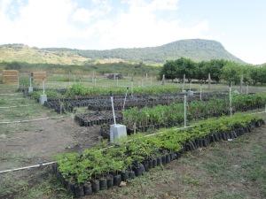 Our plant nursery